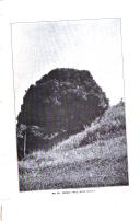 Stran 795