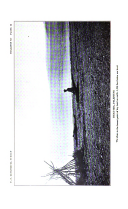 Stran 256