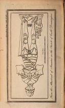Stran 1155